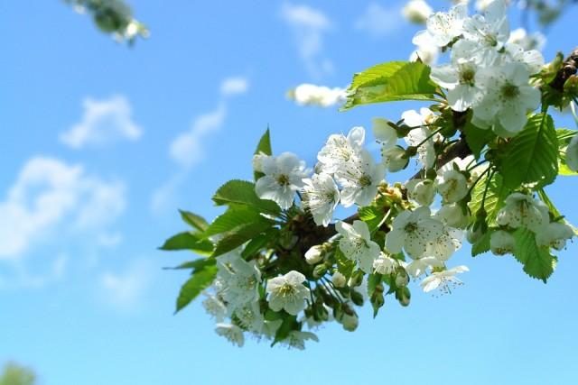 spring-1250068_960_720